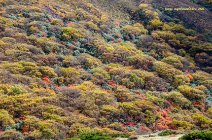Fall colors in the ravine