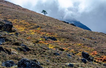 A streak of fall colors on the hillside.