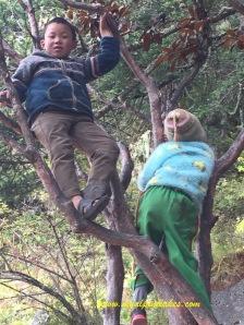 Kids in a tree!