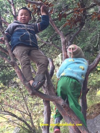Kids in a tree!