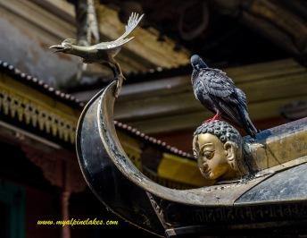 Bird vs bird