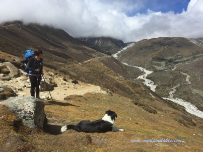 Another friend decided to follow us. Where are you going, friend? Gokyo?
