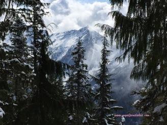 mountain view through the dense forest