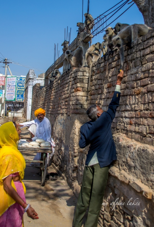 On the street of Ajmer, a man tries to feed a money on the wall.
