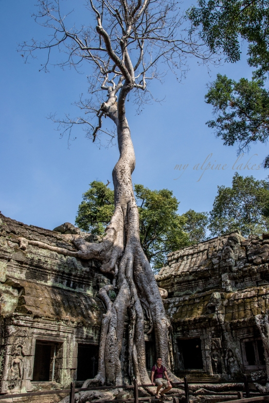 An enormous Banyan Tree took over the broke walls of Ta Prohm