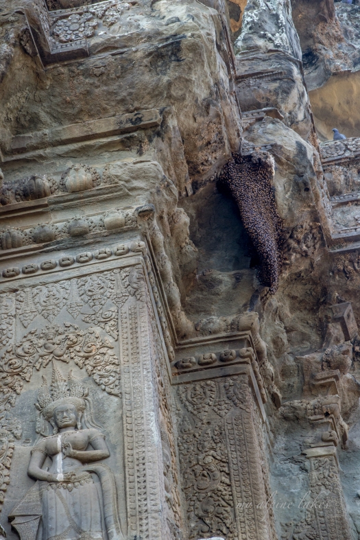 A giant wasp hive in Angkor Wat