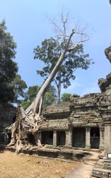 A Banyan tree so large that it is literally destroying the edifice under its roots.