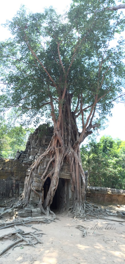 This Banyan tree took hold of the entire temple and left the gate open to still allow people to pass through. But for how much longer?