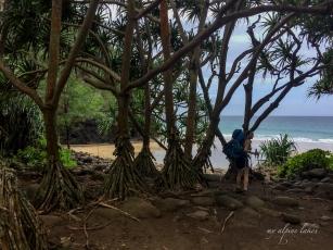 Hanakapi'ai beach. We didn't actually go on to the beach.