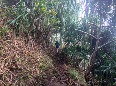 A muddy trail mixed with fallen leaves of the jungle vegetations.