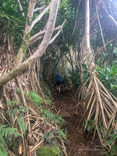 Are you ready for this jungle hike?