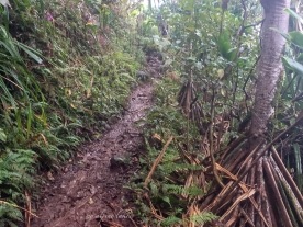 A muddy and slippery trail.