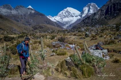 Weird vegetations in high altitude in Peru