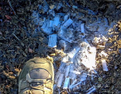 Ice crystals formed in the soil which were brought out by Tricia's skillful hike pole digging.